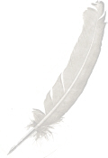 feather.jpg (2432937 bytes)