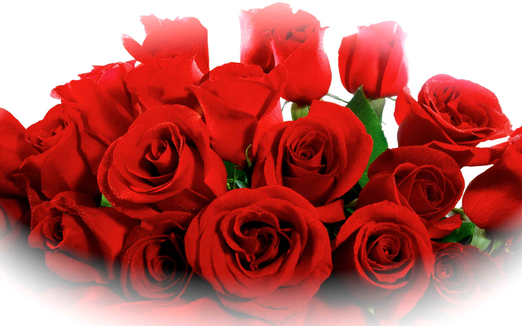 lovely_red_roses-.jpg (534576 bytes)